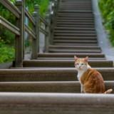 Ce chat ne sait pas monter des escaliers, les internautes sont morts de rire ! (Vidéo)