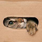 Un escape game avec des chats va ouvrir ses portes à Lyon