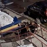 Un chat contre 7 chiens : une scène d'action digne d'un film avec Chuck Norris ! (vidéo)