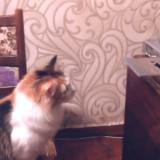Le chat qui a mis fin au CD-Rom (Vidéo du jour)