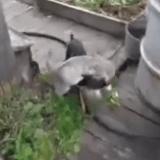 Quand un chien ramène son chat à la maison... (Vidéo du jour)