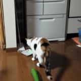 Le chat qui avait peur d'un concombre (Vidéo du jour)
