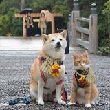 Suivez les folles aventures d'un Shiba Inu et un chat inséparables (Photos)