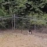 Le chat fait le tour du terrain quand une forme jaillit de nulle part : sa réaction force l'admiration (vidéo)