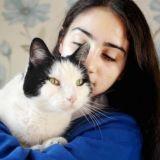 Perdu, un incroyable chat réussit à retrouver son domicile en prenant le train !