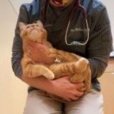 Ils récupèrent un chat souffrant dans la rue et demandent l'euthanasie, mais le vétérinaire a un geste innatendu