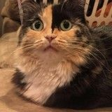 12 chats surpris d'avoir été adoptés