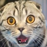 Les 5 comportements les plus étranges du chat décryptés
