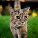 Les chats sont-ils supérieurs aux chiens ? Cette étude tend à le confirmer !