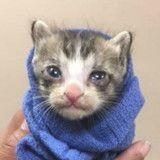 Ce minuscule chaton allait être euthanasié quand un miracle s'est produit