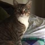 Il demande à son chat s'il a faim, sa réponse est vraiment adorable (Vidéo du Jour)