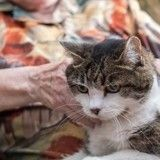 L'incroyable histoire du chat qui ne voulait pas quitter son humaine