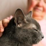 Le chat s'approche de son humaine et renifle son oeil : elle fonce chez le docteur et découvre le pire