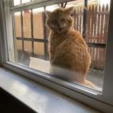 Tous les jours, un chat vient gratter à la fenêtre d'une maison : il a une excellente raison de le faire