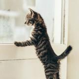 Comment empêcher son chat de se sauver ?