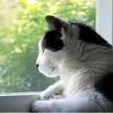 En Australie, les chats errants exterminés et les chats domestiques enfermés ?