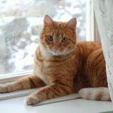 5 conseils pour le bien-être de votre chat pendant l'hiver