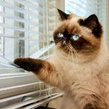 Ces chats du monde entier sont devenus des pros du confinement pendant le coronavirus