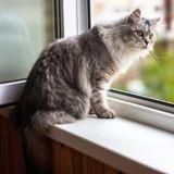 Covid-19 : les vétérinaires britanniques recommandent le confinement des chats des personnes malades
