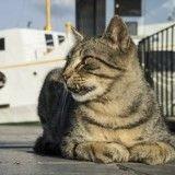 Entré clandestinement en Islande, son chat se fait euthanasier