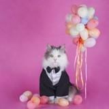 Comment inviter des gens chez soi avec un chat stressé ?