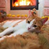 Un chat met le feu à la maison de son maître à cause d'un objet anodin !