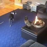 Elle regarde sa caméra de surveillance et part en courant quand elle voit ce qui arrive à son chat !