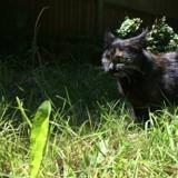 Chaque jour, ce chat ramène un cadeau très surprenant à son maître