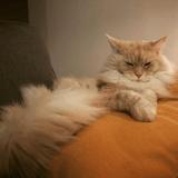 10 photos qui prouvent que l'on vit chez nos chats (et pas l'inverse)