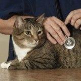 Truffe humide et froide : signe de bonne santé chez le chat ?