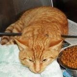 Un chat traversé par une flèche survit à ses blessures ! (Photos)