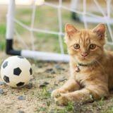 Gignac : un chat s'invite sur le terrain de foot et distrait le joueur en plein match