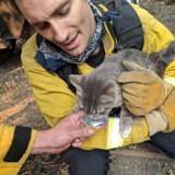 Sauvé des incendies, ce chat est devenu BFF avec son sauveur