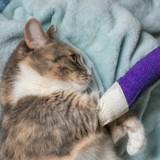 Un ingénieur tortionnaire de chats condamné à une peine de prison ferme !