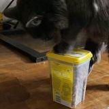 Epatant ! Ce chat arrive à ouvrir un paquet de friandises en moins d'une minute (Vidéo)