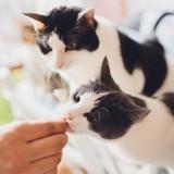 Marre des classiques friandises ? Découvrez celle qui va séduire les papilles de votre chat !