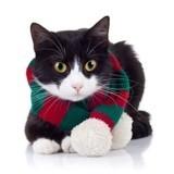 Faut-il laisser sortir son chat en hiver ?