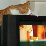 Un chat fugueur retrouvé… sur un plateau télé