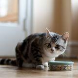 6 choses à savoir sur l'alimentation du chat
