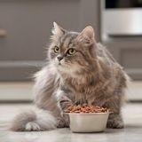 Alimentation bio pour chat : qu'est-ce que ça veut dire ?