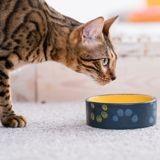 Alimentation personnalisée pour chat : et si c'était la solution aux problèmes de santé de votre animal ?