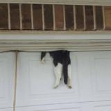 Le policier sauve un chat coincé dans une porte de garage, son maître arrive et raconte la vérité déchirante