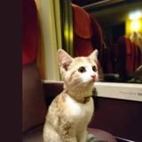 Après avoir pris le train tout seul, ce chaton a retrouvé sa maîtresse