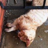En sortant dans la rue, il découvre un chat totalement gelé, s'approche et n'en revient pas (Vidéo)