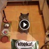 Ce chat supplie son maître de lui donner tout ce qu'il tient dans ses mains ! (Vidéo du jour)