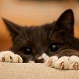 comment apprendre a un chat d aller au toilette