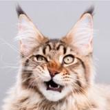 10 chats qui n'avaient pas du tout envie de faire un selfie