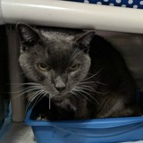 Suite à la mort de son maître, ce chat a trouvé un ami pas comme les autres