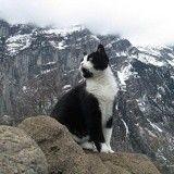 Un chat guide un randonneur perdu dans les montagnes Suisse