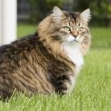 Ce chat n'arrive pas à attraper de souris, mais ce qu'il rapporte à sa maîtresse est incroyable !